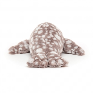 Linus Leopard Seal